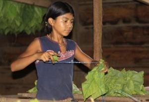 Nicaragua-Girl-TobaccoWorker-Medium