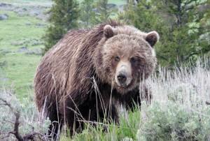debbies-bear-for-web